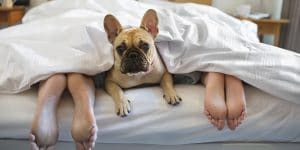 dog in bed with couple